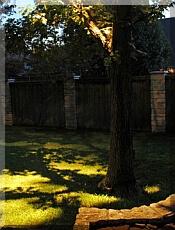 Landscape Lighting Downlighting